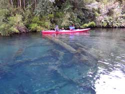 submerged forests in Llanquihue Lake