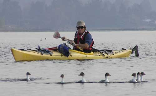 seakayak Puerto Varas in the  Lake District